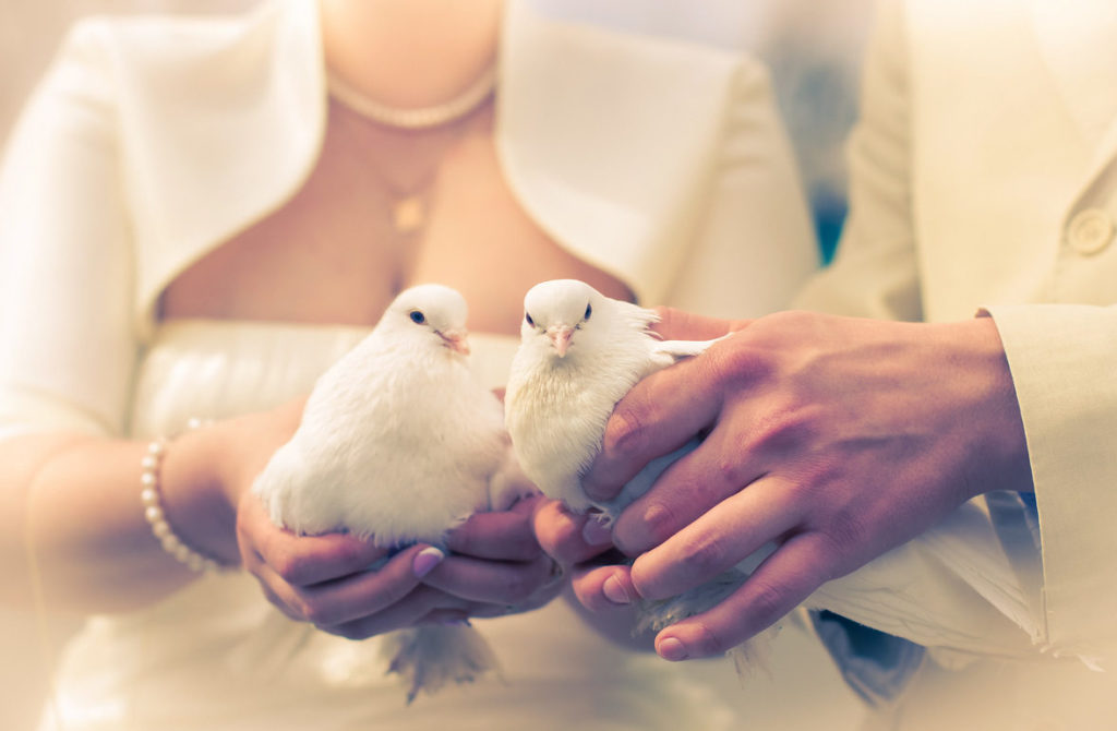 Photo of newlyweds with pigeons